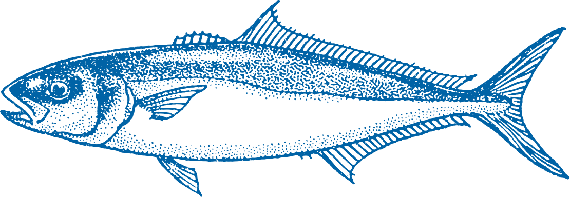 Yellowtail Kingfish Fish
